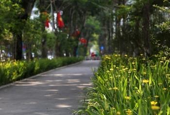 Những tuyến phố rợp bóng cây xanh làm đẹp Thủ đô