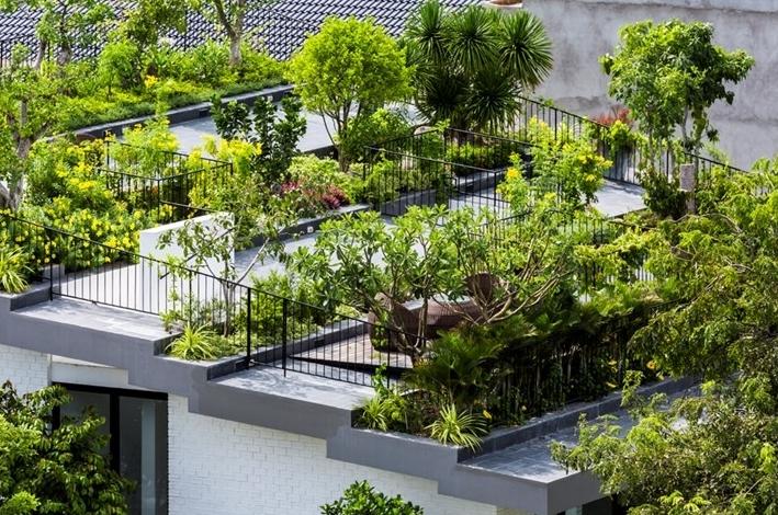 Lợi ích của cây xanh trong tiết kiệm năng lượng