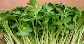 Loại rau tự trồng dễ dàng tại nhà có tác dụng bảo vệ gan đáng kinh ngạc