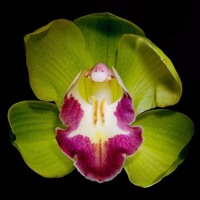 Những loài hoa đắt nhất thế giới - 2
