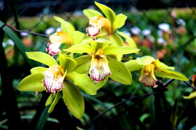 Những loài hoa đắt nhất thế giới - 1