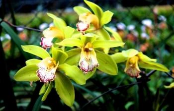 Những loài hoa đắt nhất thế giới