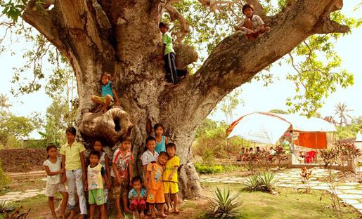 """Sự thật cây xoài 300 tuổi """"chữa bách bệnh"""""""