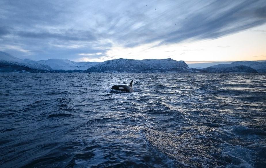 Vùng đất băng giá Siberia tăng 10 độ C trong tháng 5 vừa qua