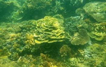 Quảng Ngãi: Khám phá rặng san hô tuyệt đẹp ở gành Yến