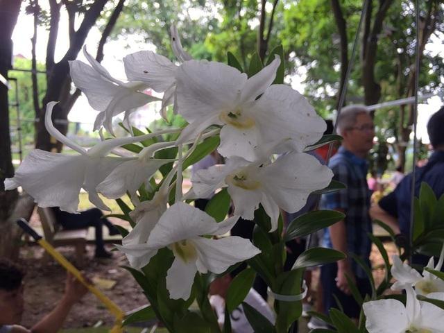 chiem nguong nhung loai hoa hoa phong lan dep nhat lao cai