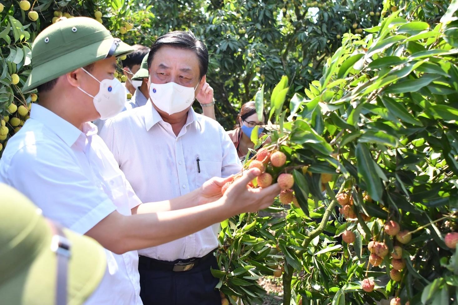 Bắc Giang kiến nghị tạo thuận lợi cho vận chuyển vải thiều