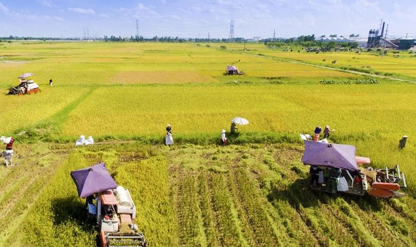 Hà Nội ban hành 5 quy trình giải quyết thủ tục hành chính lĩnh vực nông nghiệp