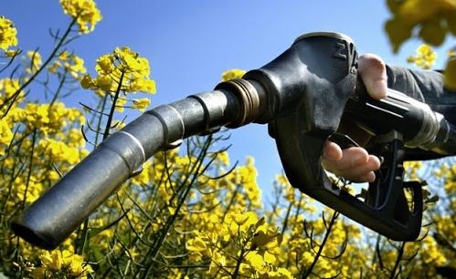 Các nhà máy lọc dầu tranh chấp từ bỏ nhiên liệu sinh học nhận được đồng thuận