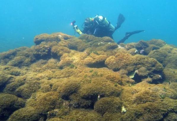 Phát hiện loài tảo bí ẩn tại rạn san hô ở Hawaii