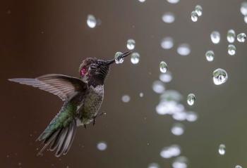 10 bức ảnh tuyệt đẹp về loài chim đạt giải thưởng Audubon