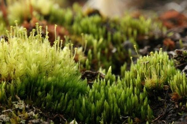 """Thực vật có thể… """"nhắn tin"""" với nhau bằng tín hiệu điện kỳ lạ"""