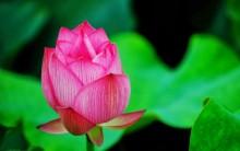Truyền thuyết về loài hoa đến từ Thiên thượng
