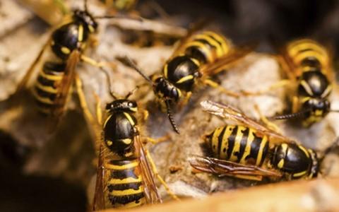 bi ong vo ve tan cong 2 nguoi tu vong 3 nguoi nguy kich