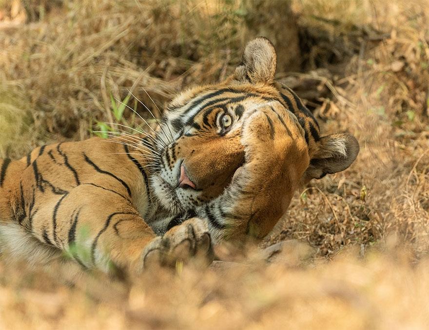 Những khoảnh khắc vui nhộn trong thế giới động vật