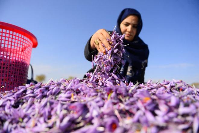 Nữ chủ nhân kho vàng đỏ của Afghanistan thách thức Taliban - 1