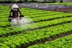 """Rau xanh của Việt Nam bị châu Âu """"tuýt còi"""""""