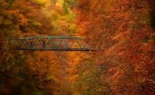 Say đắm với cảnh sắc mùa thu vàng