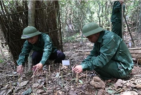 Quảng Trị thử nghiệm trồng sâm Ngọc Linh
