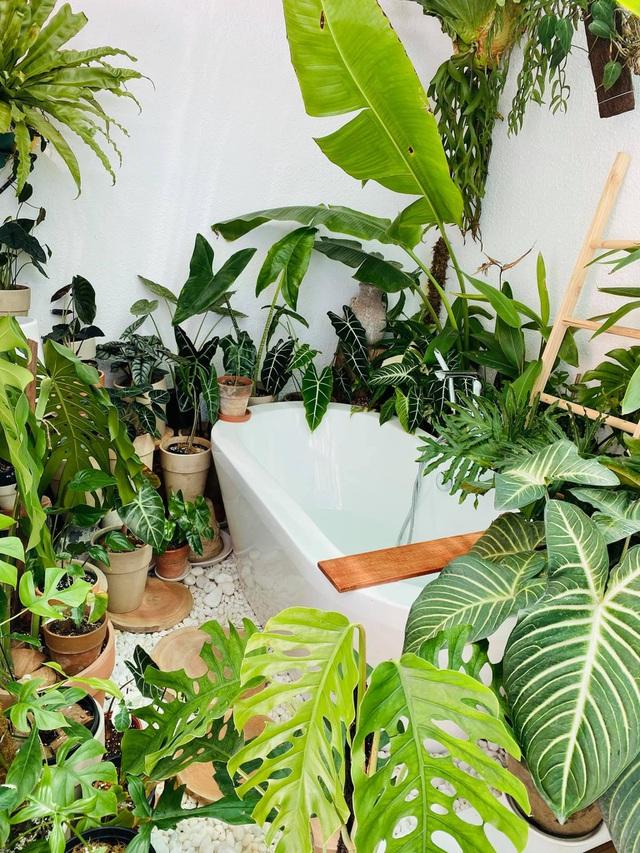 Chàng trai Sài Gòn chi 300 triệu đồng trang trí nhà bằng 50 loại cây độc lạ - 11