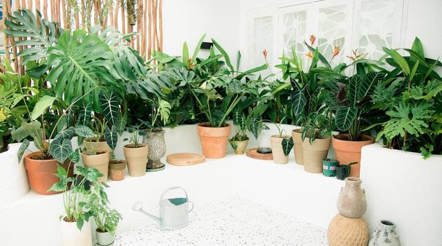 Chàng trai Sài Gòn chi 300 triệu đồng trang trí nhà bằng 50 loại cây độc lạ - 12