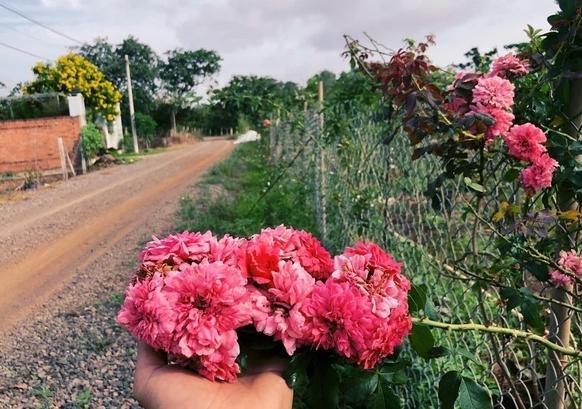Khu vườn 2.000m2 với hơn 100 loại hoa hồng đẹp như cổ tích của 9X Đồng Nai
