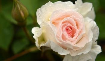 Tử vi tuần mới 5/7 - 11/7 của 12 cung hoàng đạo: Xử Nữ sáng tạo