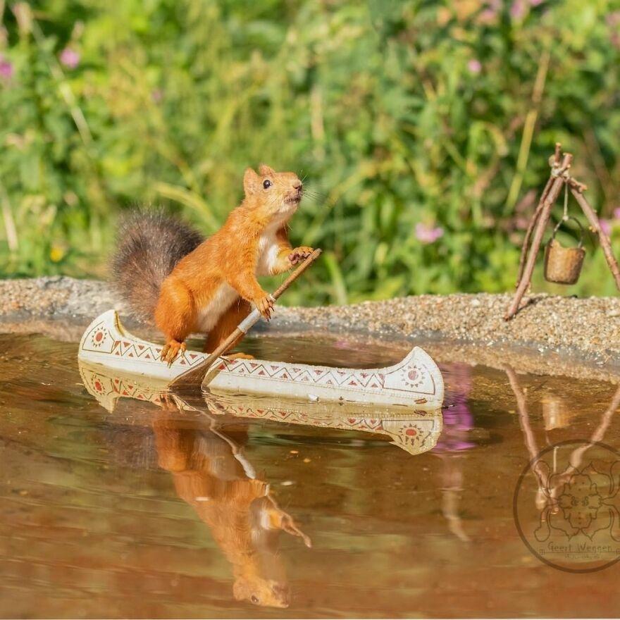 Cuộc sống đầy màu sắc của loài sóc đỏ qua ảnh