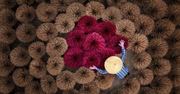 Những khoảnh khắc đẹp xao lòng của Việt Nam qua góc nhìn nhiếp ảnh