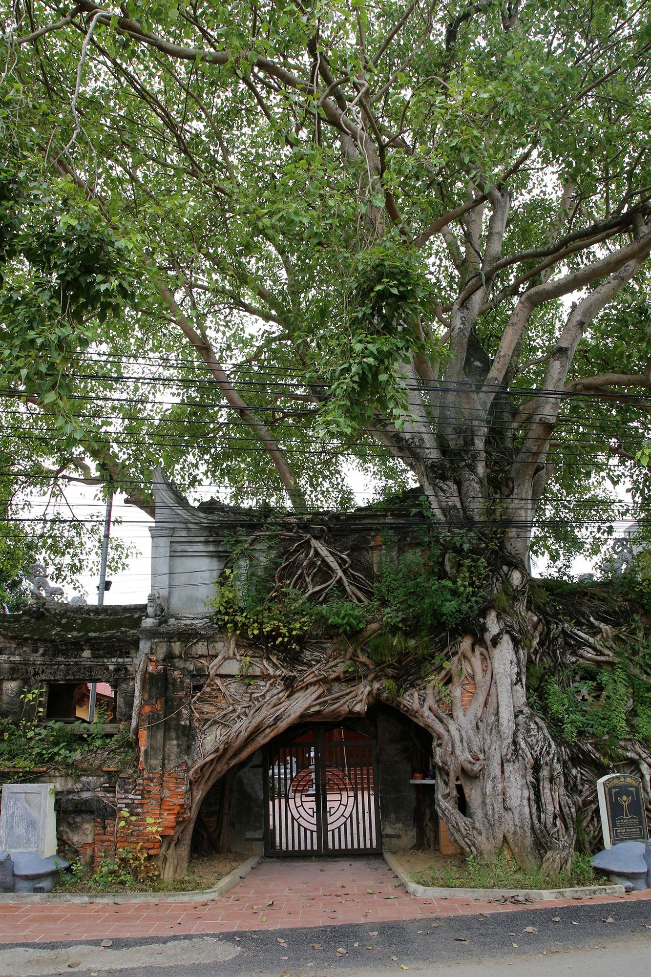 Lạc bước qua những kiệt tác cổng làng từ rễ cây độc đáo tại Bắc bộ - 11