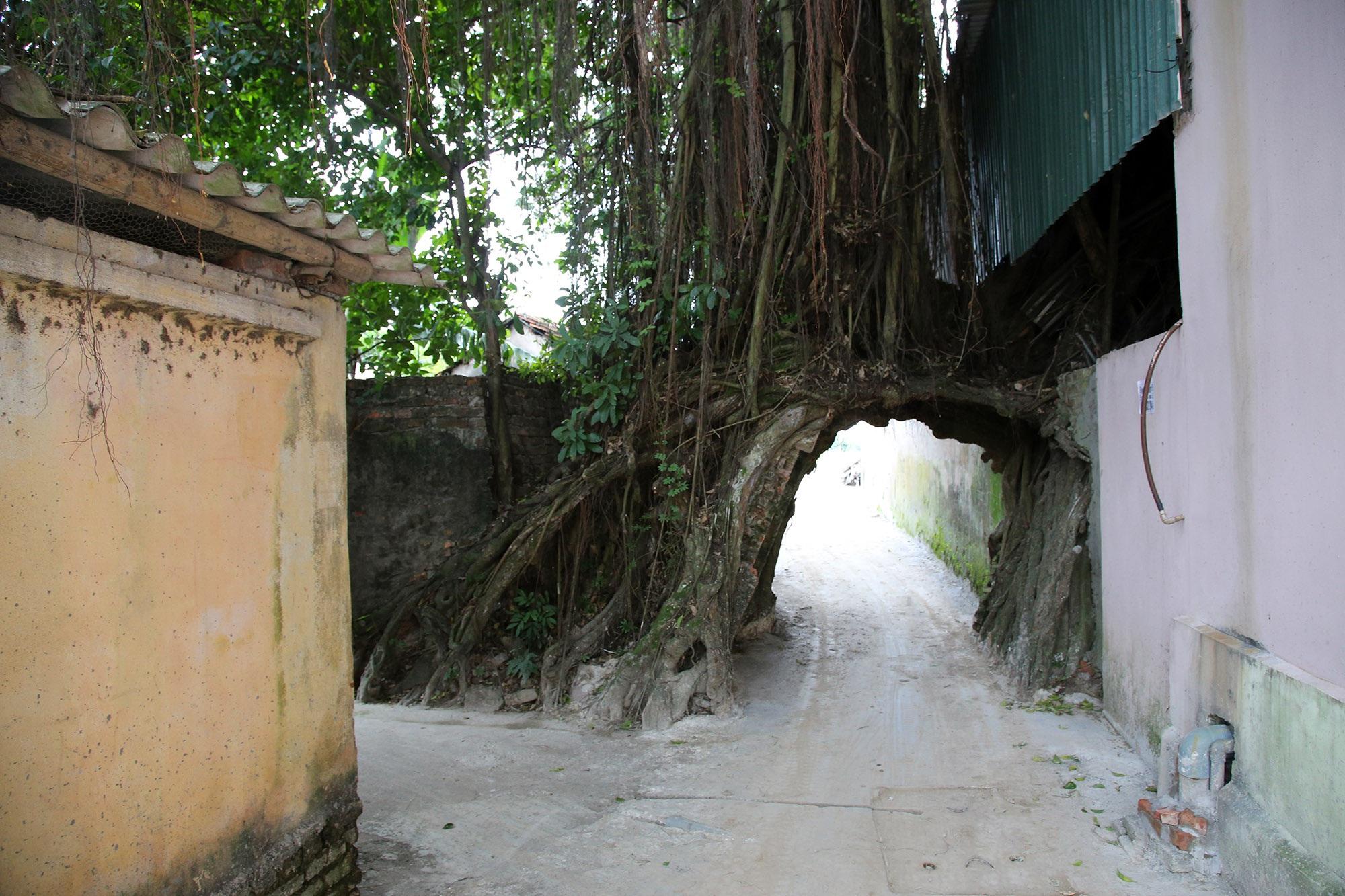 Lạc bước qua những kiệt tác cổng làng từ rễ cây độc đáo tại Bắc bộ - 14