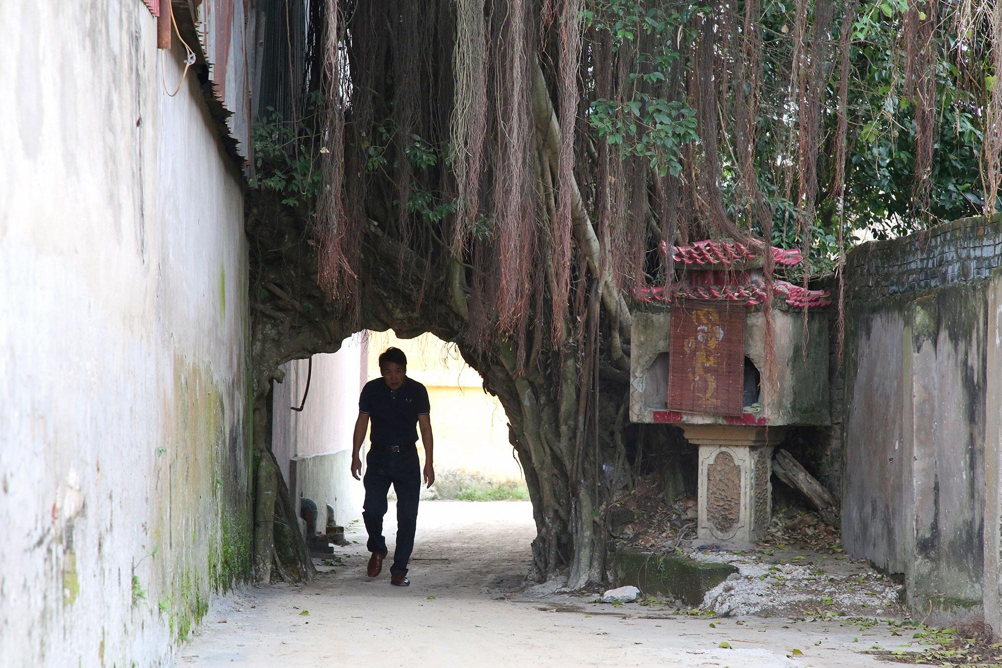 Lạc bước qua những kiệt tác cổng làng từ rễ cây độc đáo tại Bắc bộ - 15