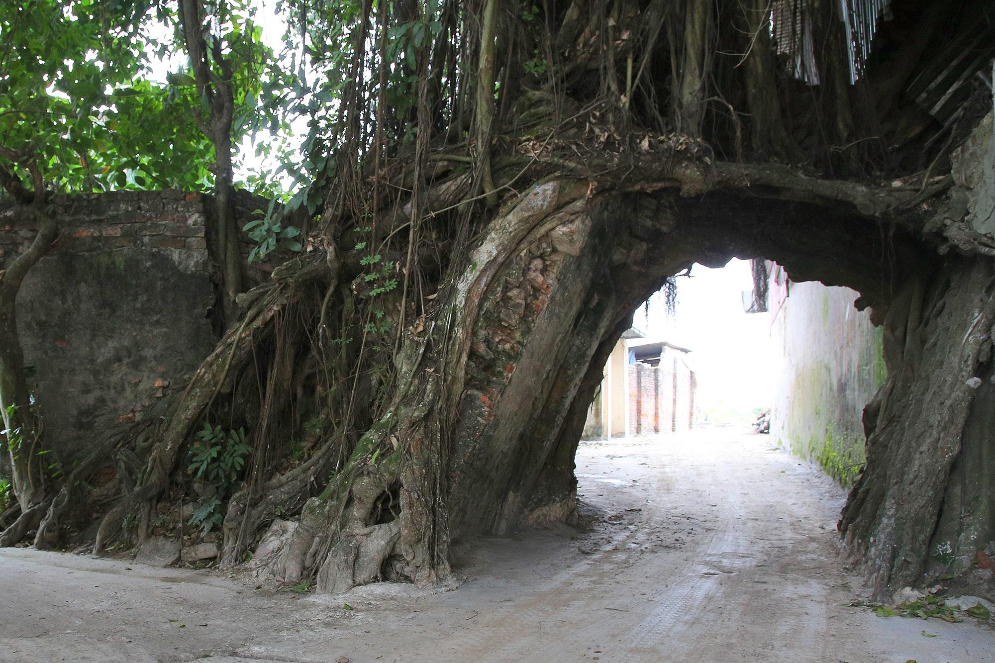 Lạc bước qua những kiệt tác cổng làng từ rễ cây độc đáo tại Bắc bộ - 16