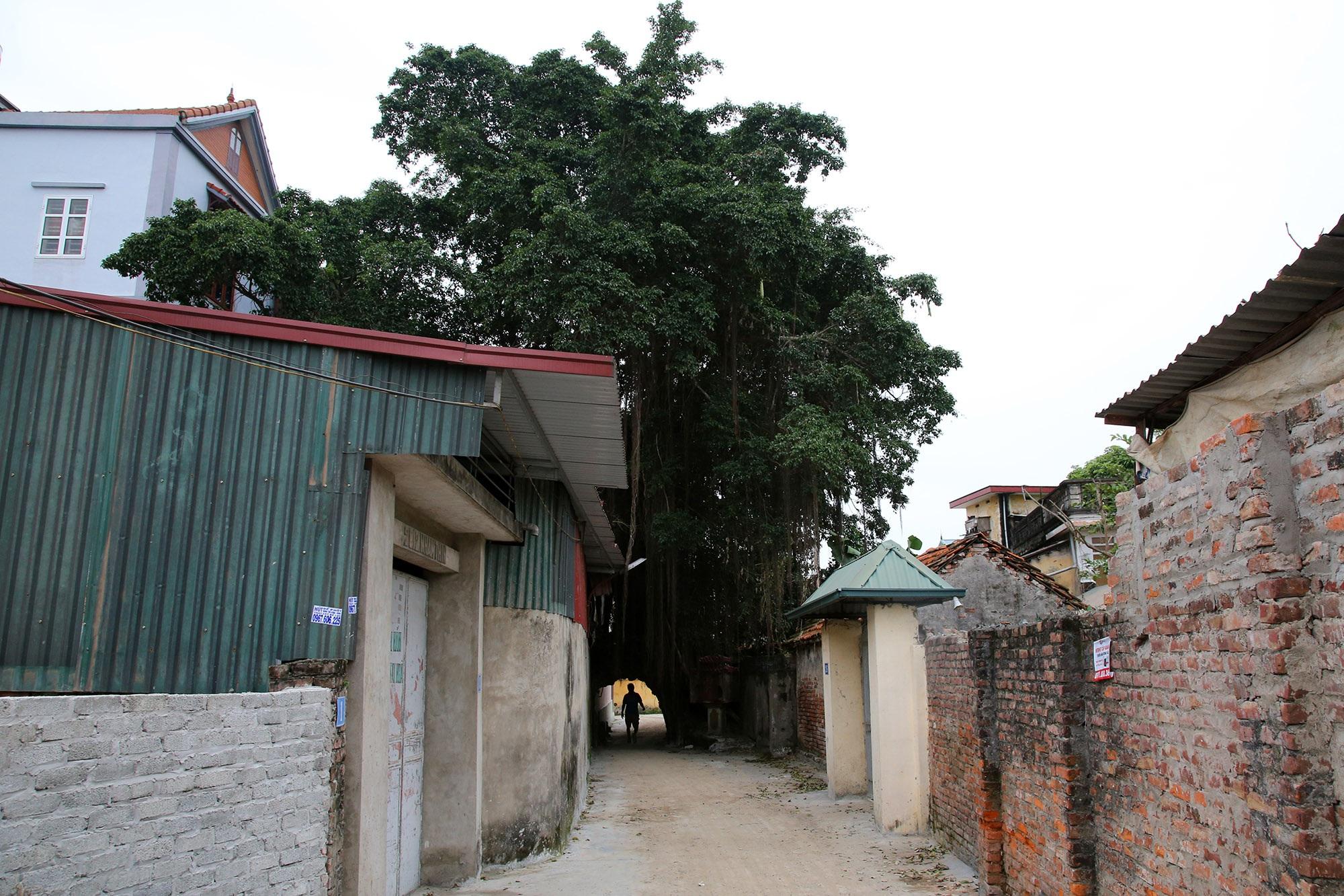 Lạc bước qua những kiệt tác cổng làng từ rễ cây độc đáo tại Bắc bộ - 17