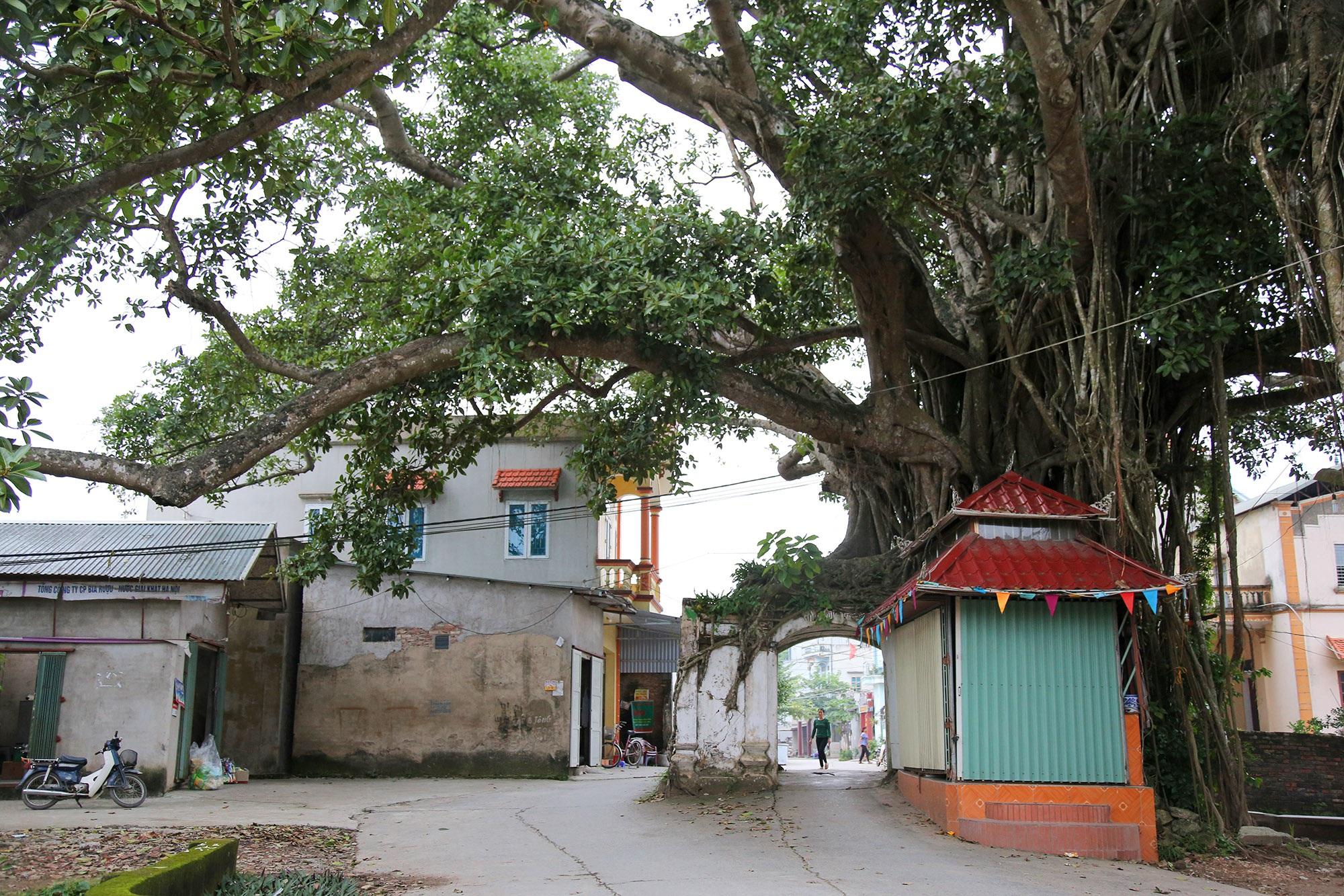 Lạc bước qua những kiệt tác cổng làng từ rễ cây độc đáo tại Bắc bộ - 4