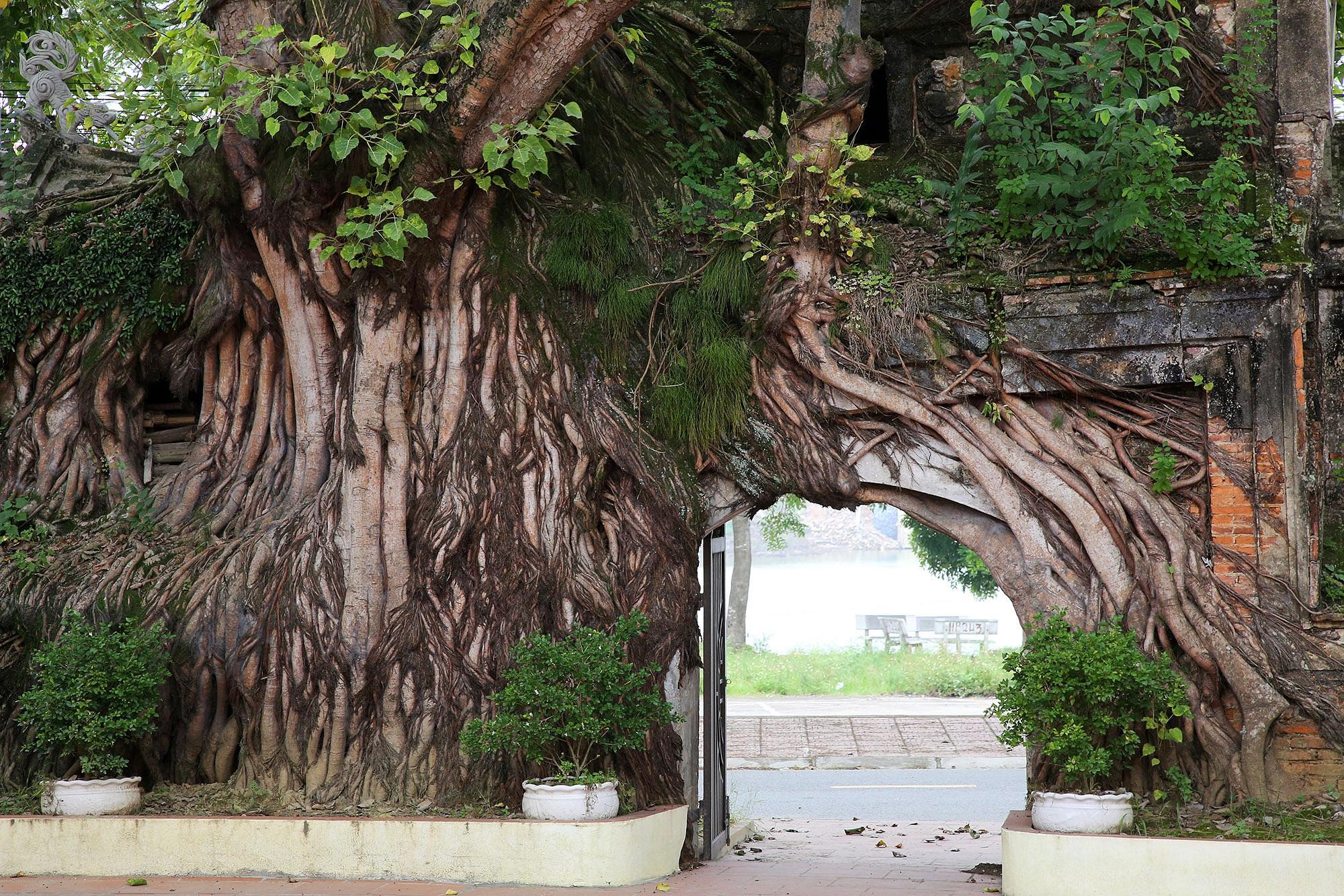 Lạc bước qua những kiệt tác cổng làng từ rễ cây độc đáo tại Bắc bộ - 9