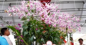 Hàng ngàn chậu lan khoe sắc tại hội thi hoa lan toàn quốc năm 2020