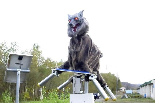 Nhật Bản sử dụng sói robot để xua đuổi và ngăn chặn gấu tấn công con người