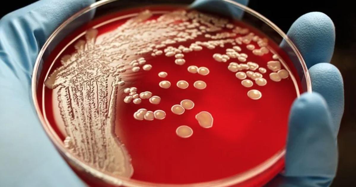 Phát hiện hơn 12.000 loài vi khuẩn hoàn toàn mới