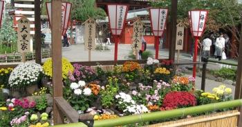 """Cận cảnh đền thờ cổ kính nhất Tokyo rạng rỡ trong """"lễ tưởng niệm hoa cúc"""""""