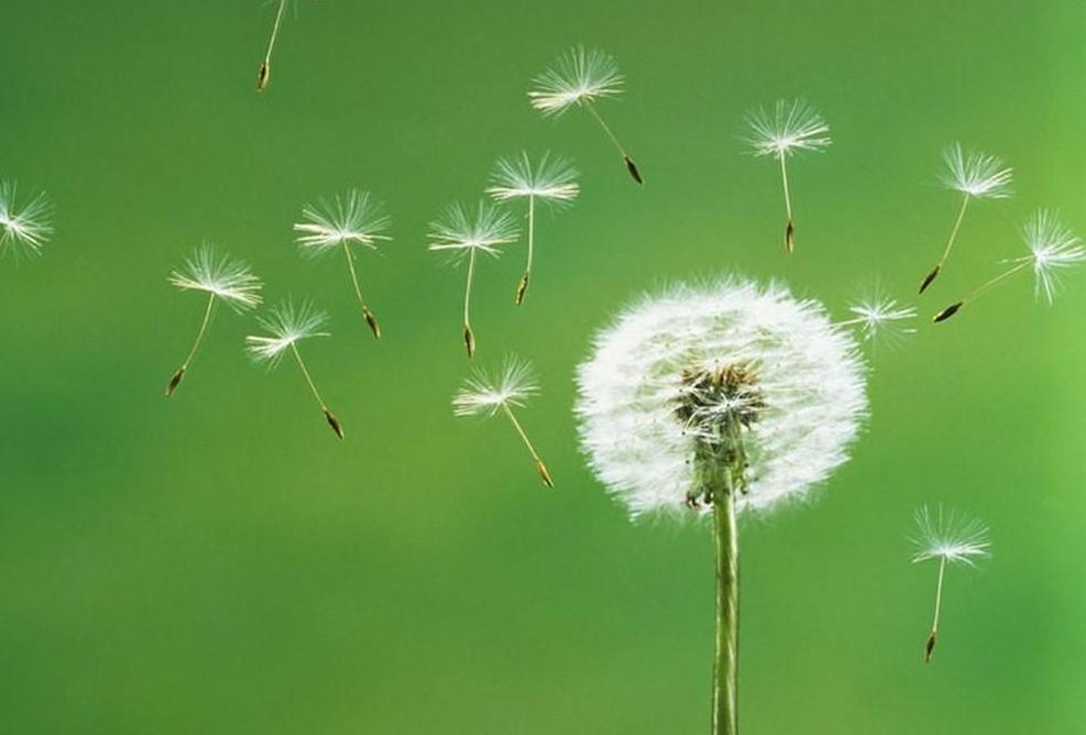 Ghi nhớ 10 điều Phật dạy giúp cuộc sống luôn an nhiên tự tại
