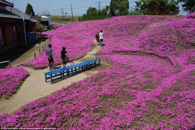 Vườn hoa đẹp như cổ tích của người đàn ông dành 10 năm trồng tặng vợ - 6