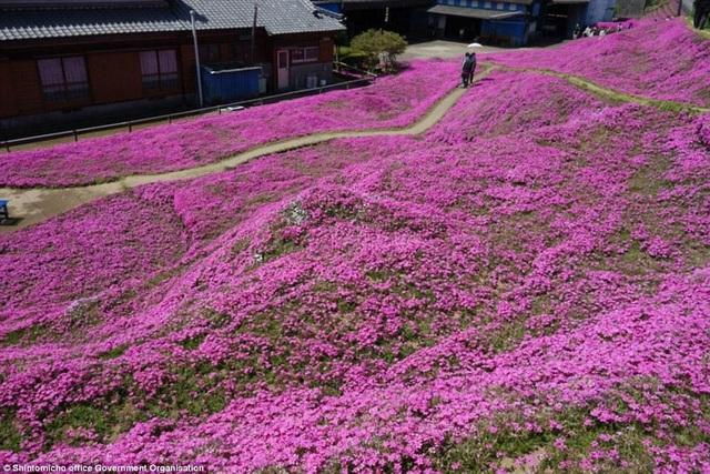 Vườn hoa đẹp như cổ tích của người đàn ông dành 10 năm trồng tặng vợ - 7