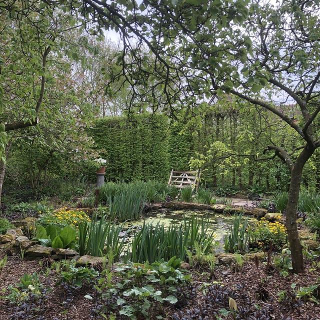 Nam MC nổi tiếng biến đất hoang thành vườn xanh tươi mát mắt, hoa nở 4 mùa - 9