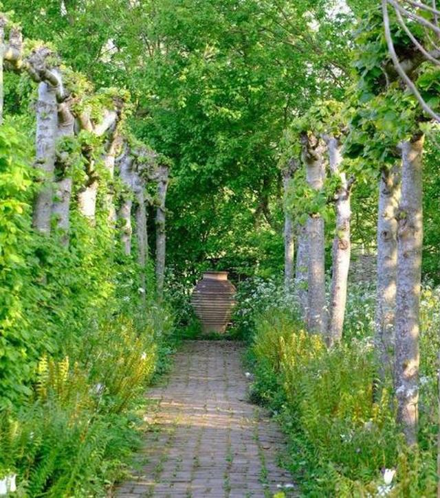 Nam MC nổi tiếng biến đất hoang thành vườn xanh tươi mát mắt, hoa nở 4 mùa - 12