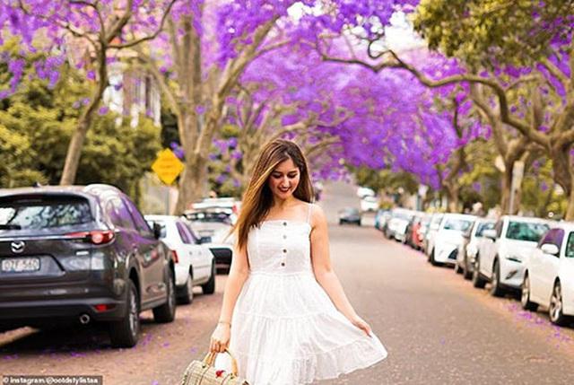 Cơn sốt hoa phượng tím mùa Xuân ở xứ Kangaroo - 3