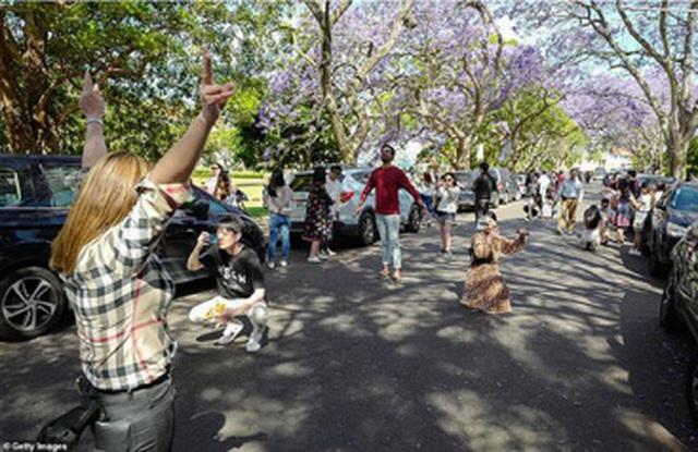Cơn sốt hoa phượng tím mùa Xuân ở xứ Kangaroo - 8