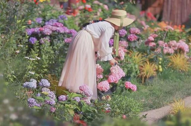 Cuộc sống như mơ của cô gái bỏ bộn bề thành phố về quê làm vườn trồng hoa - 1