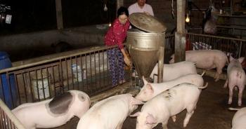 """""""Vựa heo"""" lớn nhất miền Trung gượng dậy sau dịch tả lợn châu Phi"""