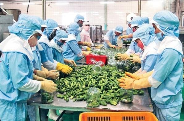 Việt Nam có 7 mặt hàng nông lâm thủy sản xuất khẩu đạt trên 2 tỷ USD